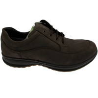 Schoenen Heren Lage sneakers Calzaturificio Loren LOG0285m marrone