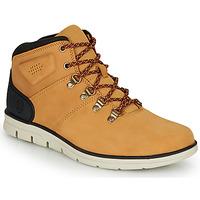 Schoenen Heren Hoge sneakers Timberland BRADSTREET HIKER Graan / Bruin