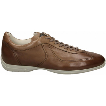 Schoenen Heren Derby Santoni PEDULA 7F+INF. GOOSE PLUS e50-marrone-medio