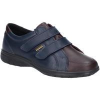 Schoenen Dames Lage sneakers Cotswold  Marine / Bruin