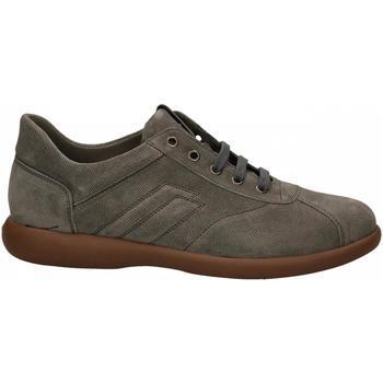 Schoenen Heren Lage sneakers Frau SUEDE roccia
