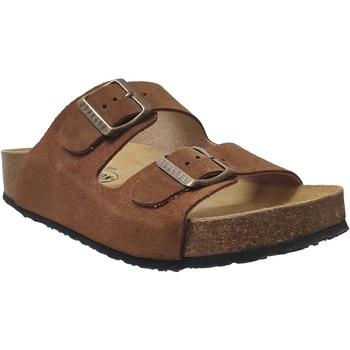 Schoenen Dames Leren slippers Plakton Cp beta Fluweelbruin