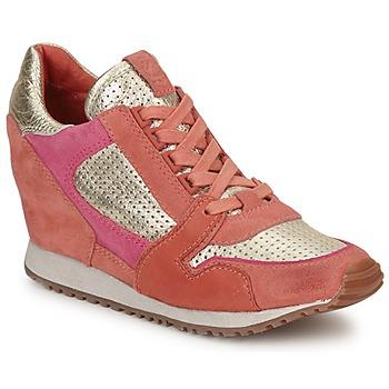Schoenen Dames Lage sneakers Ash DEAN BIS Goud / Koraal / Roze