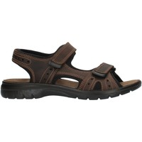 Schoenen Heren Outdoorsandalen Imac 503370 Brown