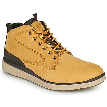 Schoenen Heren Hoge sneakers Geox U HALLSON Bruin