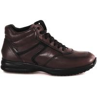 Schoenen Heren Hoge sneakers IgI&CO 2120911 Bruin