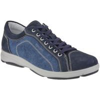 Schoenen Heren Lage sneakers IgI&CO 1113 Blauw