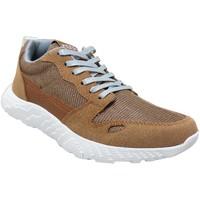 Schoenen Heren Lage sneakers Kdopa Stan Bruin