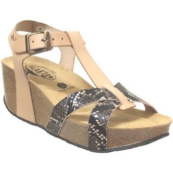Schoenen Dames Sandalen / Open schoenen Plakton So cross Beige leer