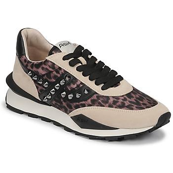 Schoenen Dames Lage sneakers Ash SPIDER STUDS Beige / Zwart
