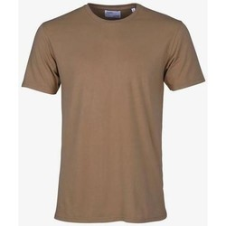 Textiel T-shirts korte mouwen Colorful Standard T-shirt  Sahara Camel marron
