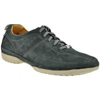 Schoenen Heren Hoge sneakers Clarks  Blauw