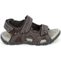 Schoenen Heren Sandalen / Open schoenen Elementerre Akka Marron Bruin