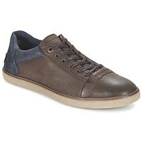 Schoenen Heren Lage sneakers Kickers CALIC Bruin / Donker