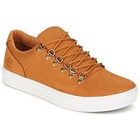 Schoenen Heren Lage sneakers Timberland ADV 2.0 CUPSOLE ALPINE OX Bruin