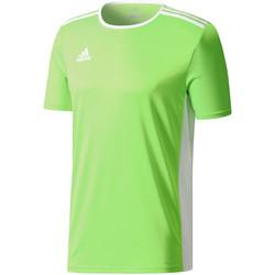 Textiel Heren T-shirts korte mouwen adidas Originals Entrada 18 Jersey Grün
